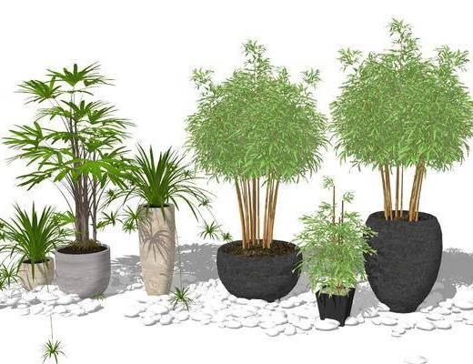 盆栽, 植物, 盆栽组合