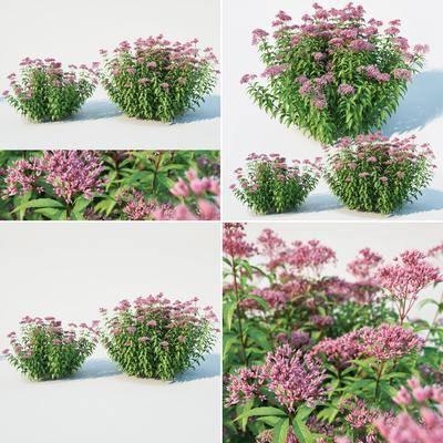 植物花丛, 绿植植物, 花卉, 现代