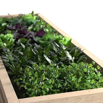 现代盆栽花盆组合, 植物, 菜, 现代