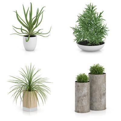 花瓶, 花卉, 绿植, 盆栽, 植物, 现代