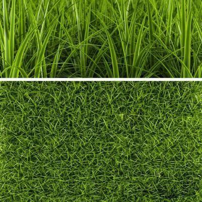 现代草坪, 草坪, 草地, 现代