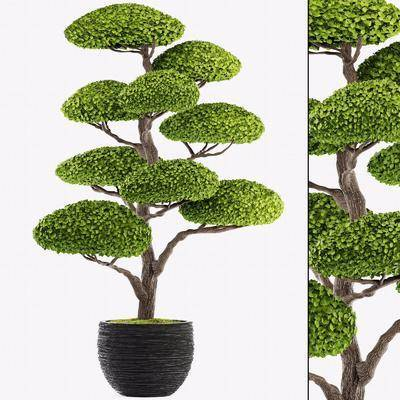 盆栽, 植物, 绿植