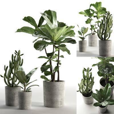绿植盆栽, 盆栽组合, 绿植植物, 现代