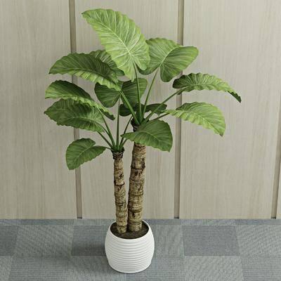 绿植植物, 盆栽, 现代
