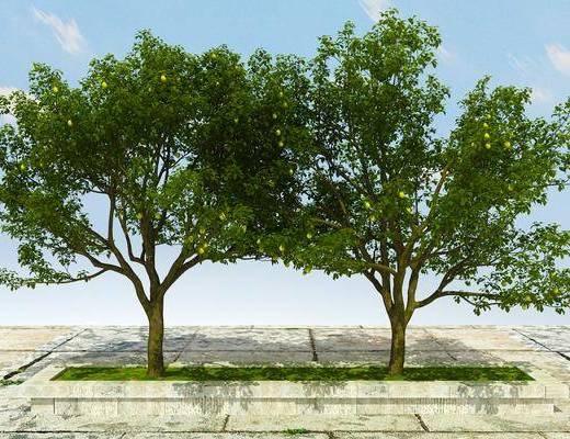 绿化植物, 景观植物