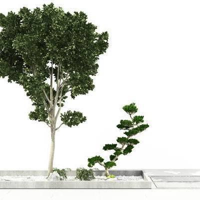 树木, 树, 绿植, 植物