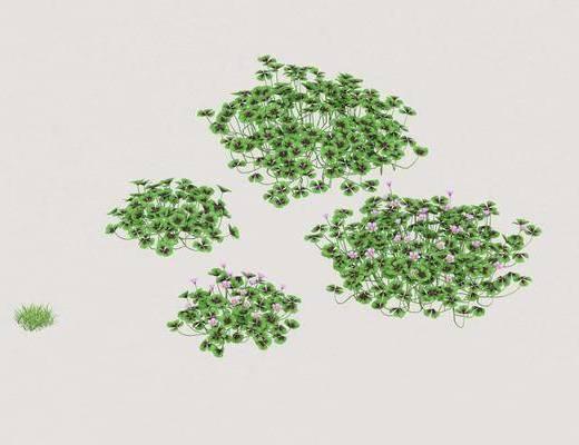 花草, 植物, 绿植, 现代