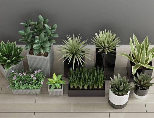 盆栽植物, 绿植植物, 盆栽组合, 现代