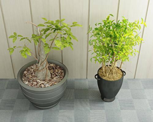 绿植盆栽, 植物, 现代