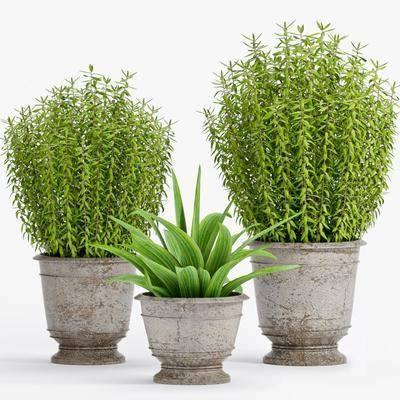 盆栽, 植物, 现代, 现代盆栽, 户外盆栽