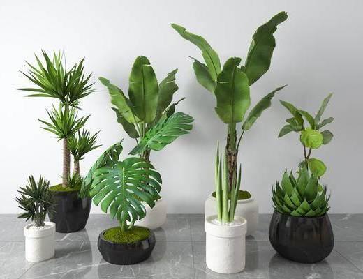 花盆, 植物, 花草