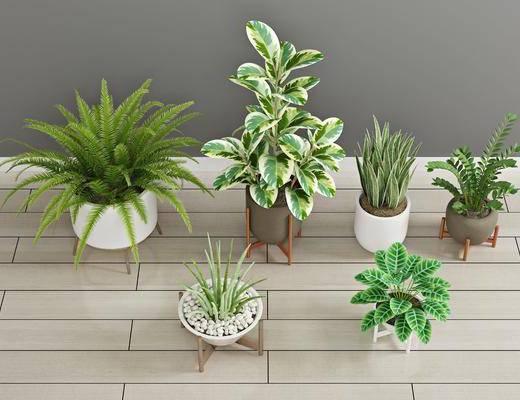 盆栽, 植物, 花