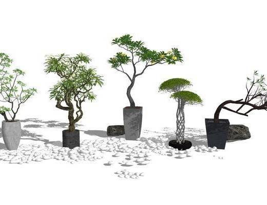 盆栽, 植物, 盆景组合