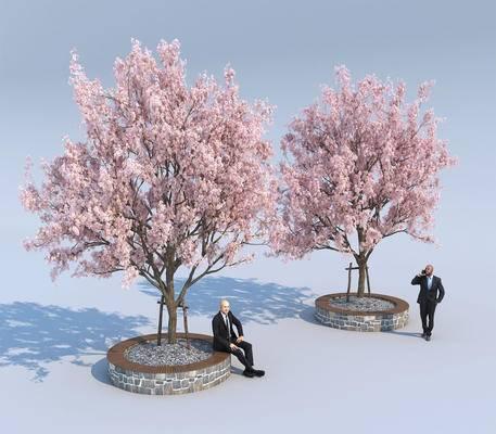景观树, 花树, 公园树, 广场树, 樱花树, 日本樱花, 办公人物, 树池, 桃树