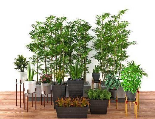 竹子, 盆栽, 植物