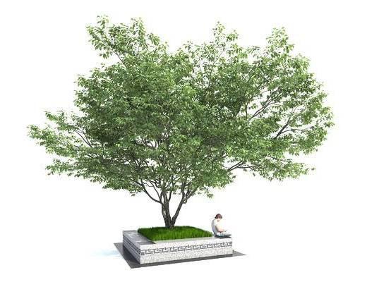 公园树, 广场树, 阵列树, 行到树, 稀松树形, 花坛