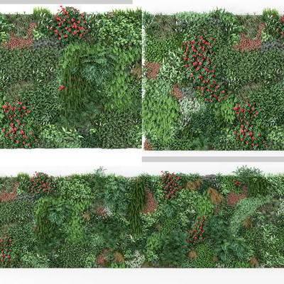 植物墙, 植物, 绿化墙