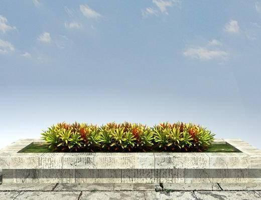 绿化, 景观, 植物