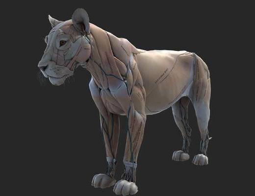 现代摆件, 标本, 动物