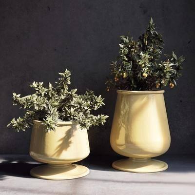 盘栽, 花盆, 植物, 现代