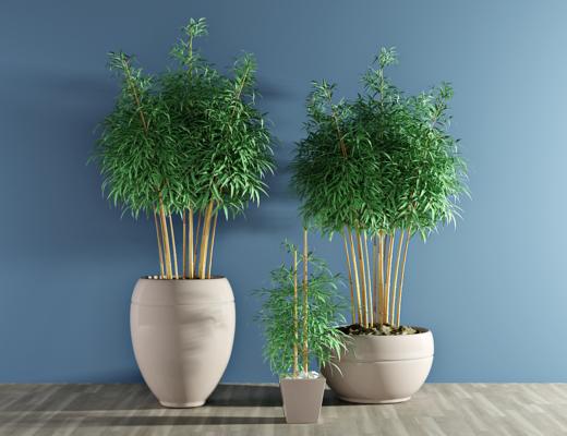 现代竹子盆栽, 植物, 绿植