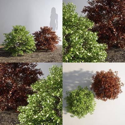 灌木, 树木, 现代