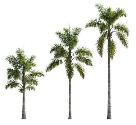 树木, 植物, 椰子树