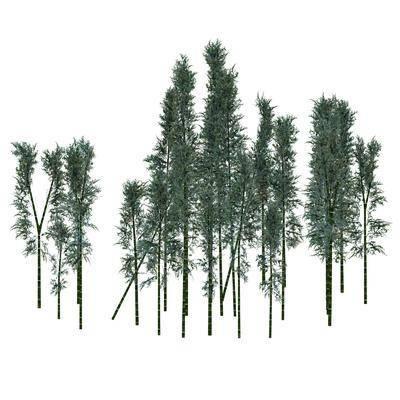 竹子, 树木, 植物