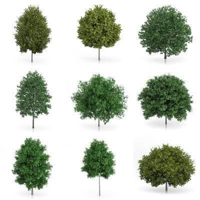 树木, 灌木, 现代树木, 树叶, 植物, 绿植, 室外植物, 现代