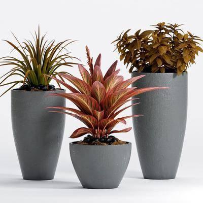 花盘, 盘栽, 植物, 现代