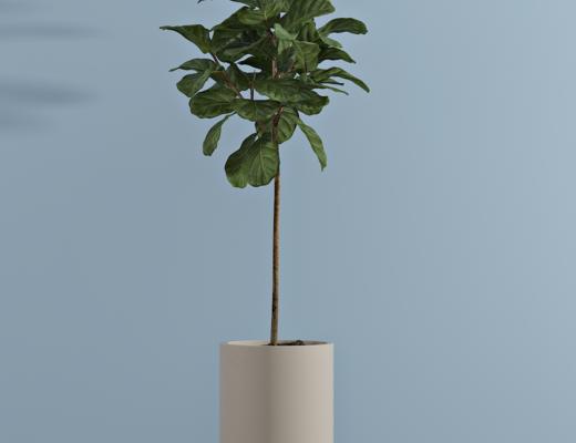 现代盆栽, 室内绿植, 绿色植物