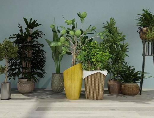 绿植组合, 盆栽, 现代