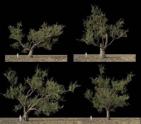 桉树, 树木, 植物