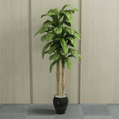 盆栽, 现代盆栽, 植物, 绿植, 室内盆栽, 现代