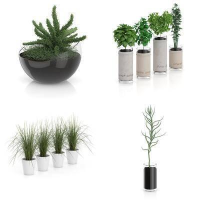 盆栽, 植物, 绿植, 现代, 现代植物盆栽