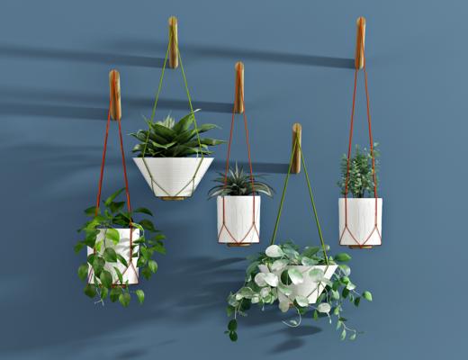 现代绿萝吊篮盆栽, 绿植, 植物, 花盘