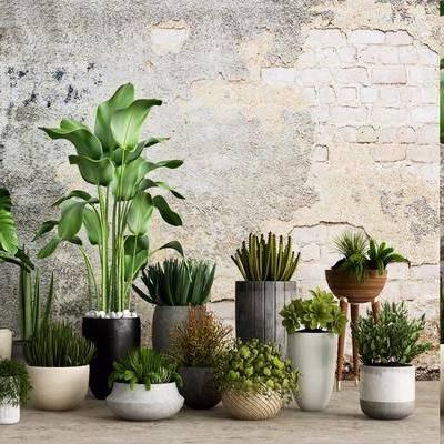 盆栽, 植物, 室内盆栽, 绿植, 现代, 多肉植物