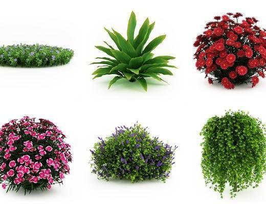植物盆栽, 灌木, 树木花卉, 现代