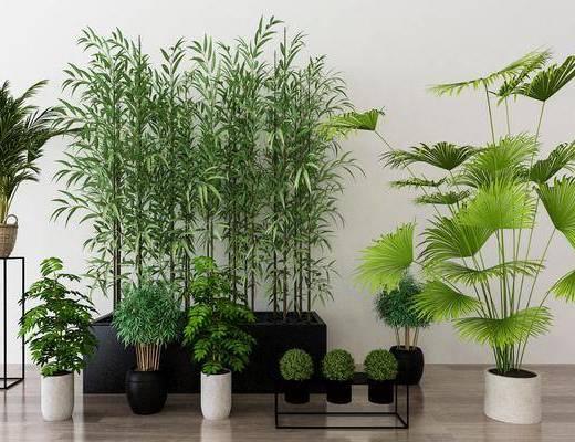 植物盆栽, 树木, 盆栽, 绿植, 现代