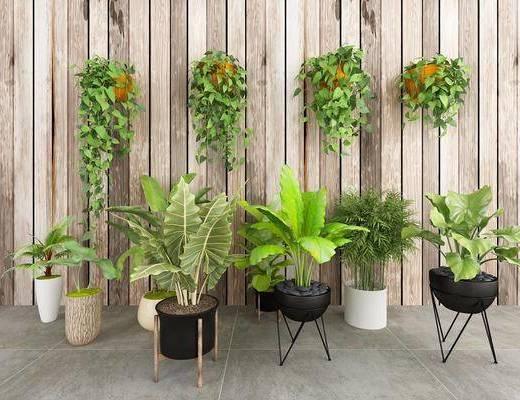 植物, 盆栽, 绿植, 现代