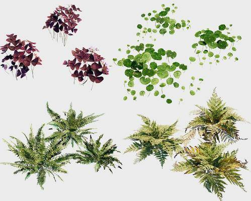 花草, 植物, 绿植, 现代花草