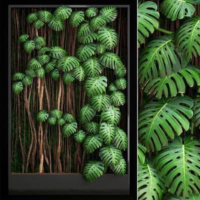 植物, 植物墙, 现代植物墙, 现代