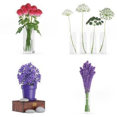 植物, 花瓶, 花卉, 现代