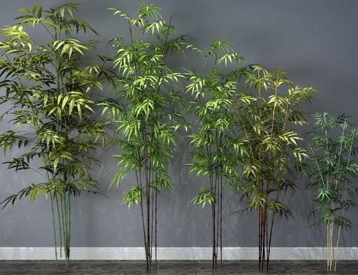 竹子, 植物, 装饰, 树木