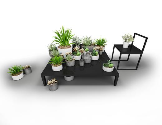 植物, 盆栽, 多肉